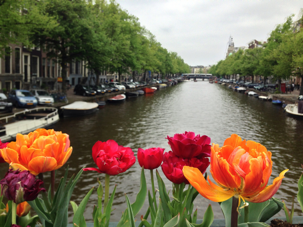 11 Free Things To Do In Amsterdam